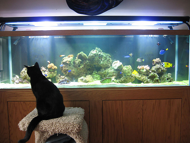 Buster-and-the-reef